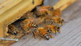 Bienen am Eingang zur Bienenstocknahaufnahme stock video footage