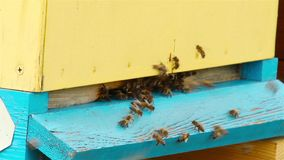 Bienen fliegen in den Bienenstock stock footage