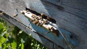 Bienen fliegen vom Bienenstock stock video