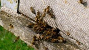 Bienen fliegen vom Bienenstock stock footage