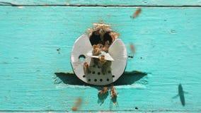 Bienen fliegen vom Bienenstock, schließen herauf Ansicht der Arbeitsbienen Bienenhaus im Waldbienenvolkfliegen um Bienenstock stock video footage