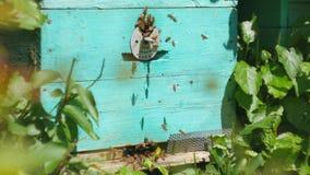 Bienen fliegen vom Bienenstock, schließen oben Ansicht der Arbeitsbienen Bienenhaus im Waldbienenvolkfliegen um Bienenstock stock footage