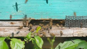 Bienen fliegen vom Bienenstock, schließen oben Ansicht der Arbeitsbienen Bienenhaus im Waldbienenvolkfliegen um Bienenstock stock video