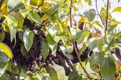 Bienen fliegen weg von dem Bienenstock Stockbilder
