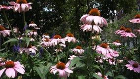 Bienen-Garten stock footage