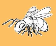 Bienen-Gekritzel Stockfotografie