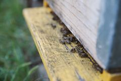 Bienen im Bienenhaus lizenzfreies stockfoto