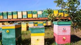 Bienen im Bienenhaus in der Wiese sind viele Bienenhäuser, Bienenstöcke Honigproduktion auf Bauernhof Der Bienenschwarm längsseit stock video
