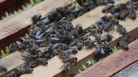 Bienen im Bienenstock stock video