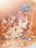 Bienen innerhalb des Bienenstocks Lizenzfreie Stockfotografie