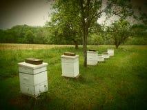 Bienen-Kästen Stockbild