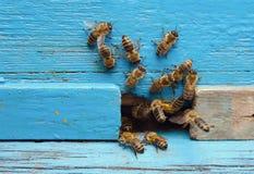 Bienen mit Honig Stockbilder