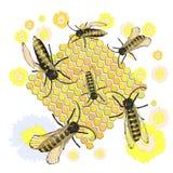 Bienen montieren Honig Der Tanz vektor abbildung