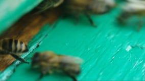 Bienen nahe einer Bienenstock Nahaufnahme stock video