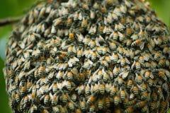 Bienen und Bienenwabe stockfotografie