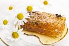 Bienen und Bienenwaben Lizenzfreie Stockfotografie