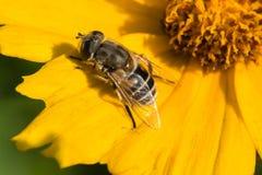 Bienen und Blumen Stockfoto