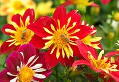 Bienen und Blumen Lizenzfreies Stockfoto