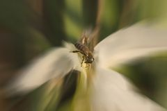 Bienen-und Blumen-Auszug Lizenzfreies Stockbild