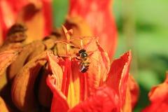 Bienen und Blumen sind schön Lizenzfreies Stockfoto