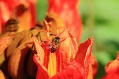 Bienen und Blumen sind schön Stockfoto