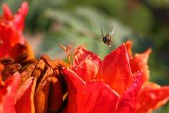 Bienen und Blumen sind schön Stockfotografie