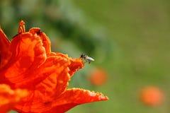 Bienen und Blumen sind schön Stockfotos