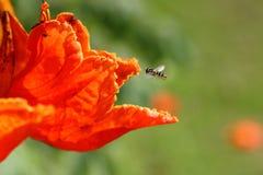 Bienen und Blumen sind schön Lizenzfreies Stockbild