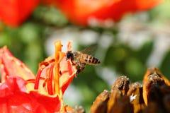 Bienen und Blumen sind schön Stockbilder