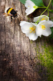 Bienen- und Blumenjasmin auf altem hölzernem Hintergrund Lizenzfreie Stockfotografie