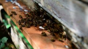 Bienen am vorderen Bienenstockeingang stock video footage