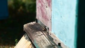 Bienen am vorderen Bienenstockeingang Langsame Bewegung stock footage
