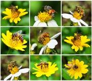 Bienen zu einer Blume Stockbild