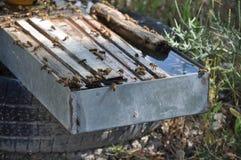 Bienen in Zypern Lizenzfreie Stockfotografie