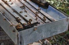 Bienen in Zypern Stockfotos