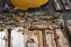 Bienen in Zypern Lizenzfreie Stockfotos