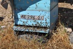 Bienen in Zypern Stockbilder