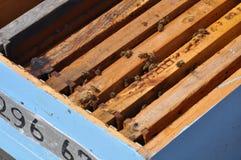 Bienen in Zypern Lizenzfreies Stockbild