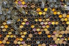 Bienenarbeit über Bienenwaben Lizenzfreies Stockfoto