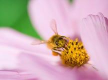 Bienenarbeitskraft Lizenzfreie Stockbilder