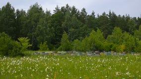 Bienenbienenhaus am Rand der Waldbienenhäuser stock footage
