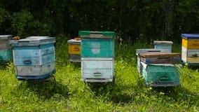 Bienenbienenhaus am Rand der Waldbienenhäuser stock video footage