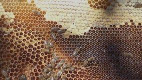 Bienenbienenwabe mit Honig und perga stock footage
