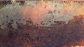 Bienenbienenwabe mit Honig und perga stock video footage