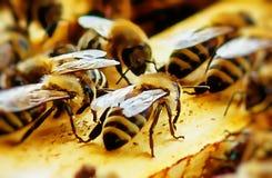 Bienenbienenwaben mit Honig und Bienen Bienenzucht Grafischer Effekt stockbild