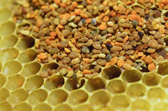 Bienenblütenstaub Lizenzfreie Stockbilder