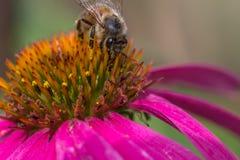 Bienenfütterung Stockbild