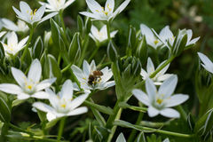 Bienenfrühling bereits! lizenzfreies stockfoto
