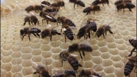Bienengestaltbienenwaben stock footage