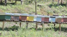 Bienenhäuser stock footage